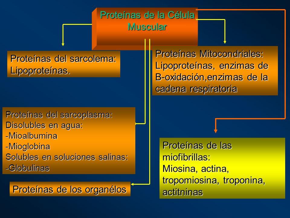 Proteínas del sarcolema: Lipoproteínas.