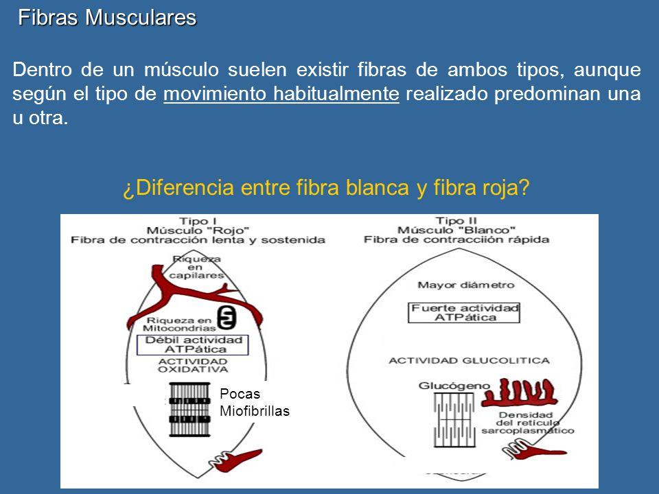 ¿Diferencia entre fibra blanca y fibra roja