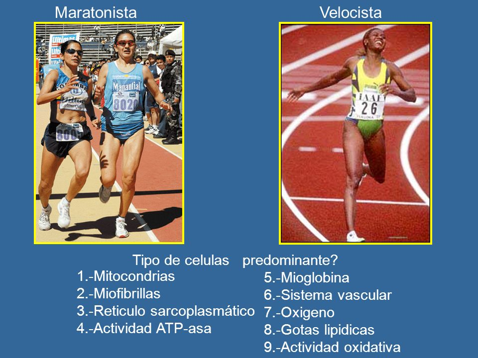 Maratonista Velocista Tipo de celulas predominante 1.-Mitocondrias