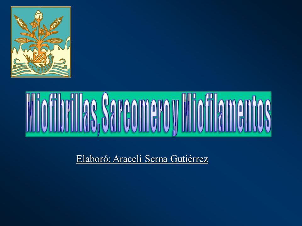 Miofibrillas, Sarcomero y Miofilamentos