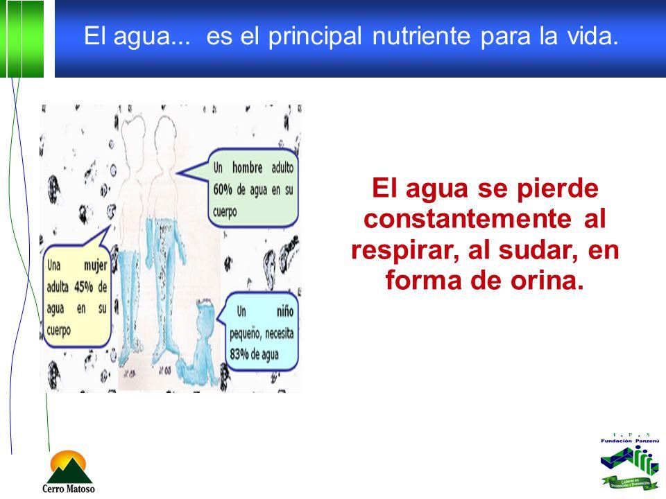El agua... es el principal nutriente para la vida.