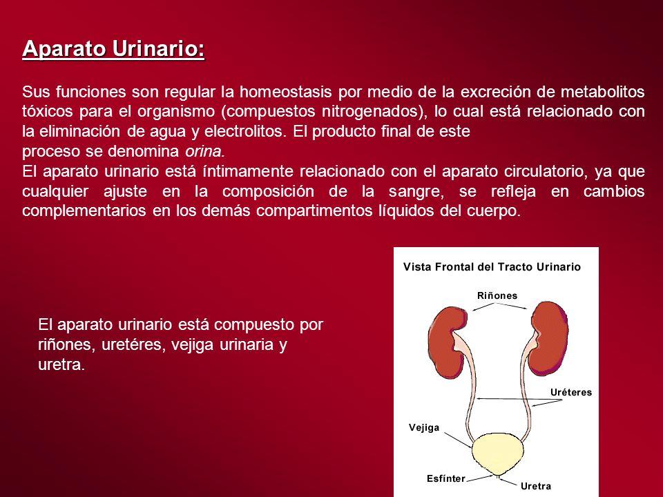 Aparato Urinario: