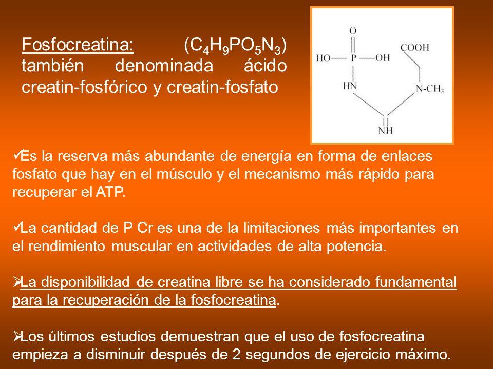 Fosfocreatina: (C4H9PO5N3) también denominada ácido creatin-fosfórico y creatin-fosfato