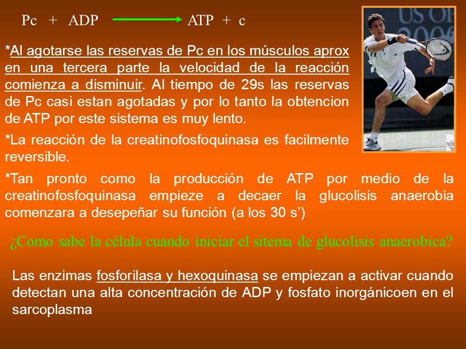 Pc + ADP ATP + c.
