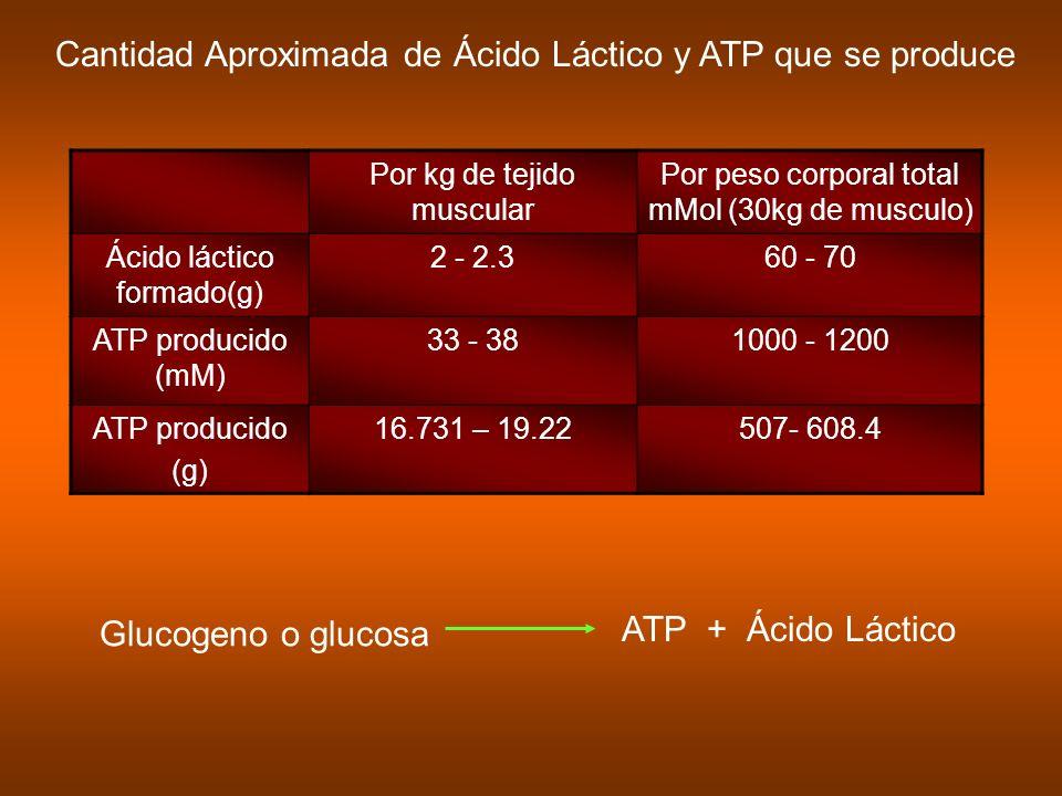 Cantidad Aproximada de Ácido Láctico y ATP que se produce