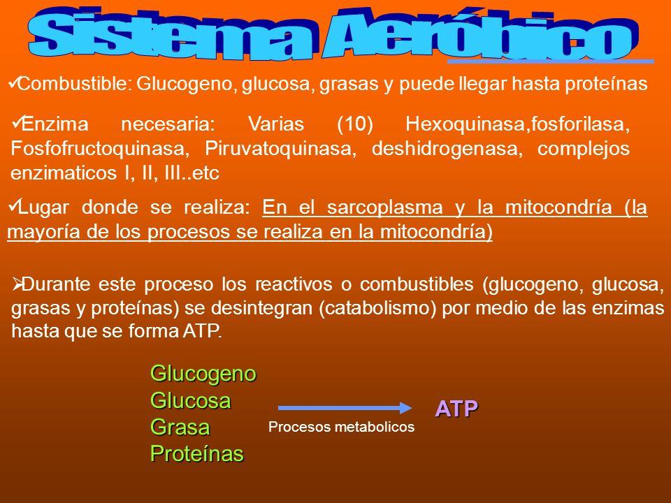 Sistema Aeróbico Glucogeno Glucosa Grasa ATP Proteínas