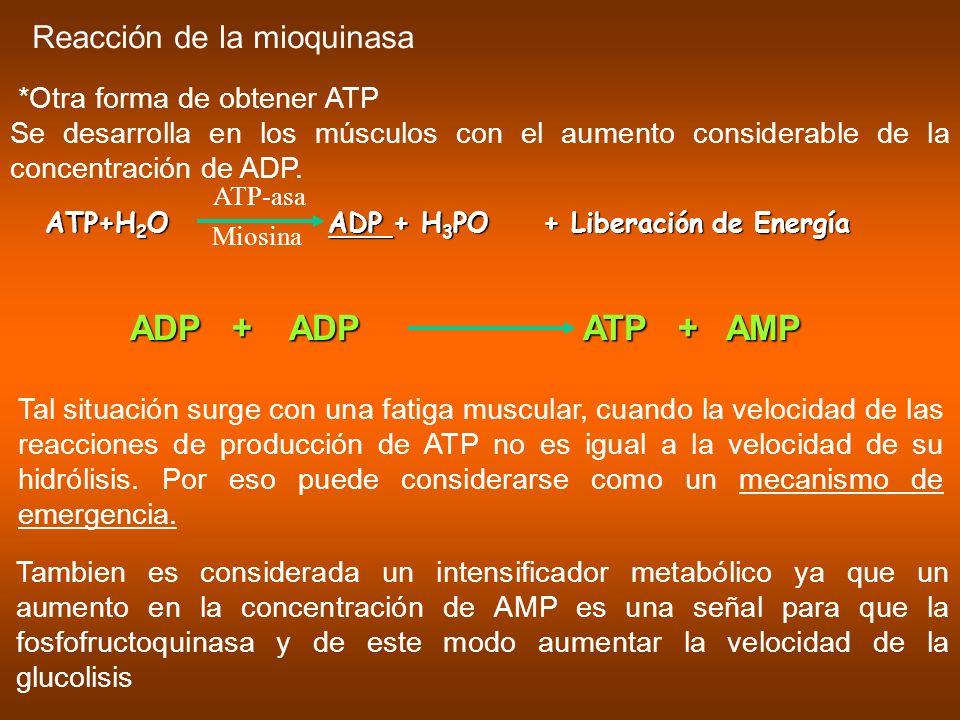 ADP + ADP ATP + AMP Reacción de la mioquinasa