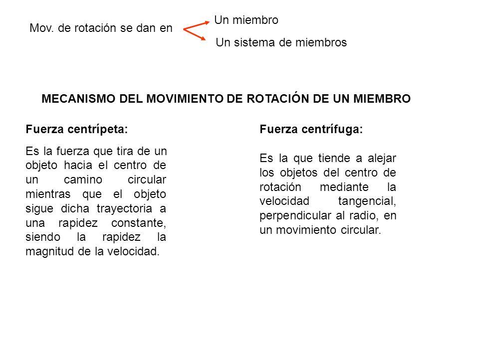 MECANISMO DEL MOVIMIENTO DE ROTACIÓN DE UN MIEMBRO