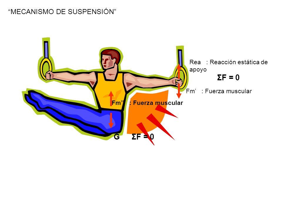 ΣF = 0 G ΣF = 0 MECANISMO DE SUSPENSIÓN