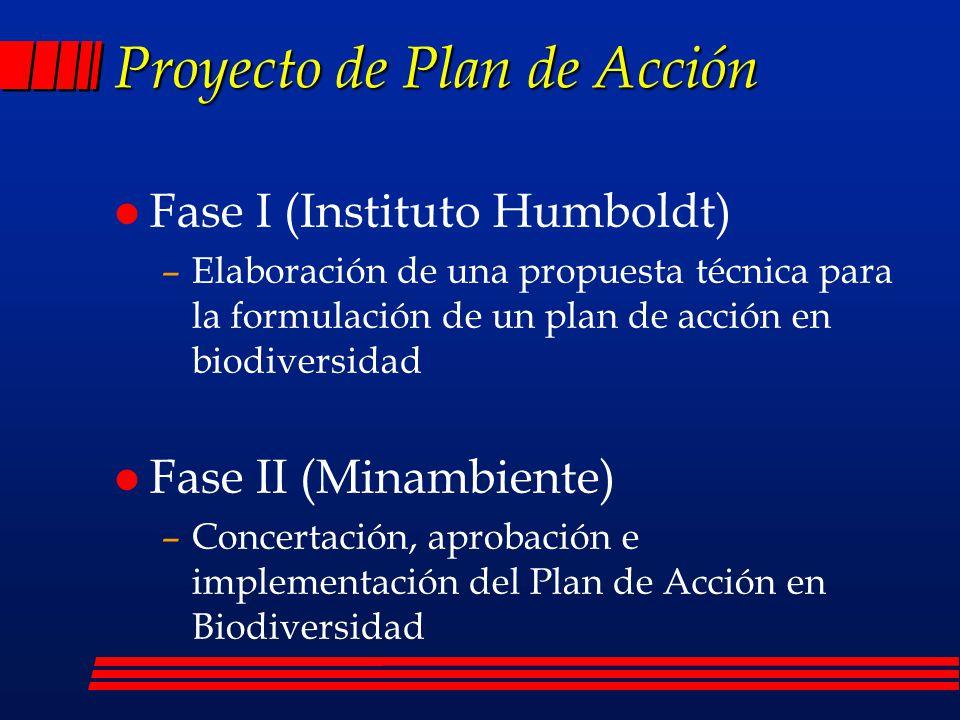 Proyecto de Plan de Acción