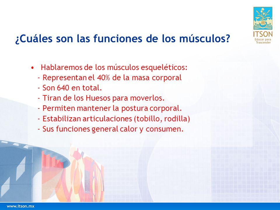 ¿Cuáles son las funciones de los músculos
