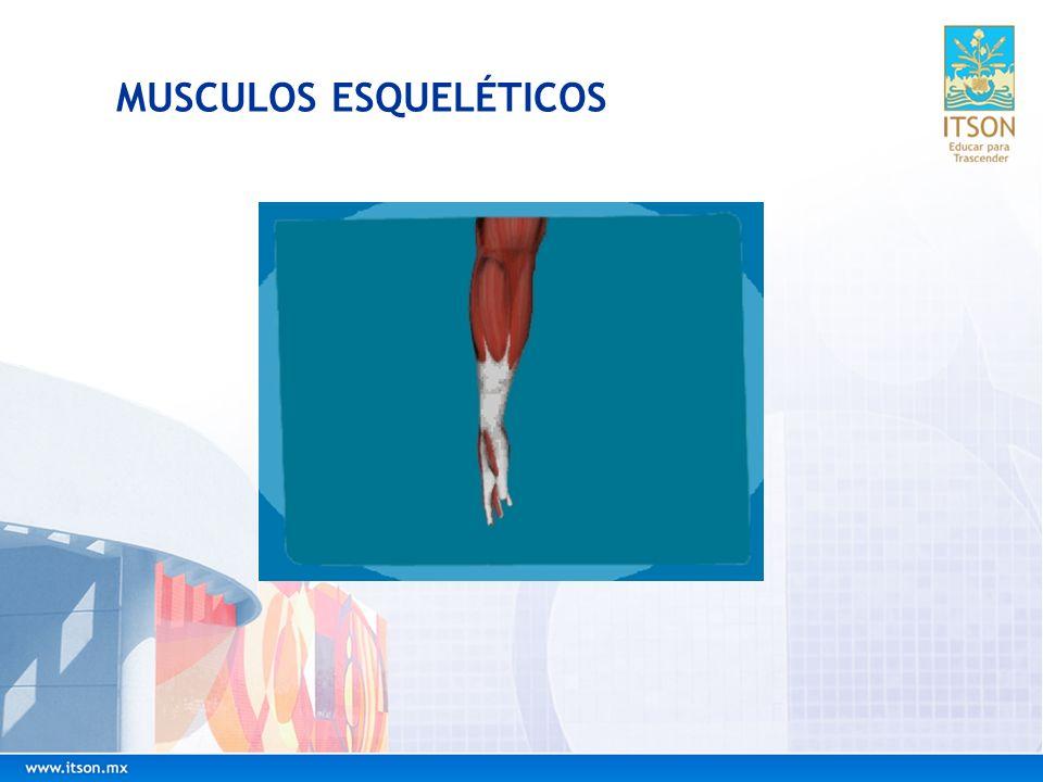MUSCULOS ESQUELÉTICOS