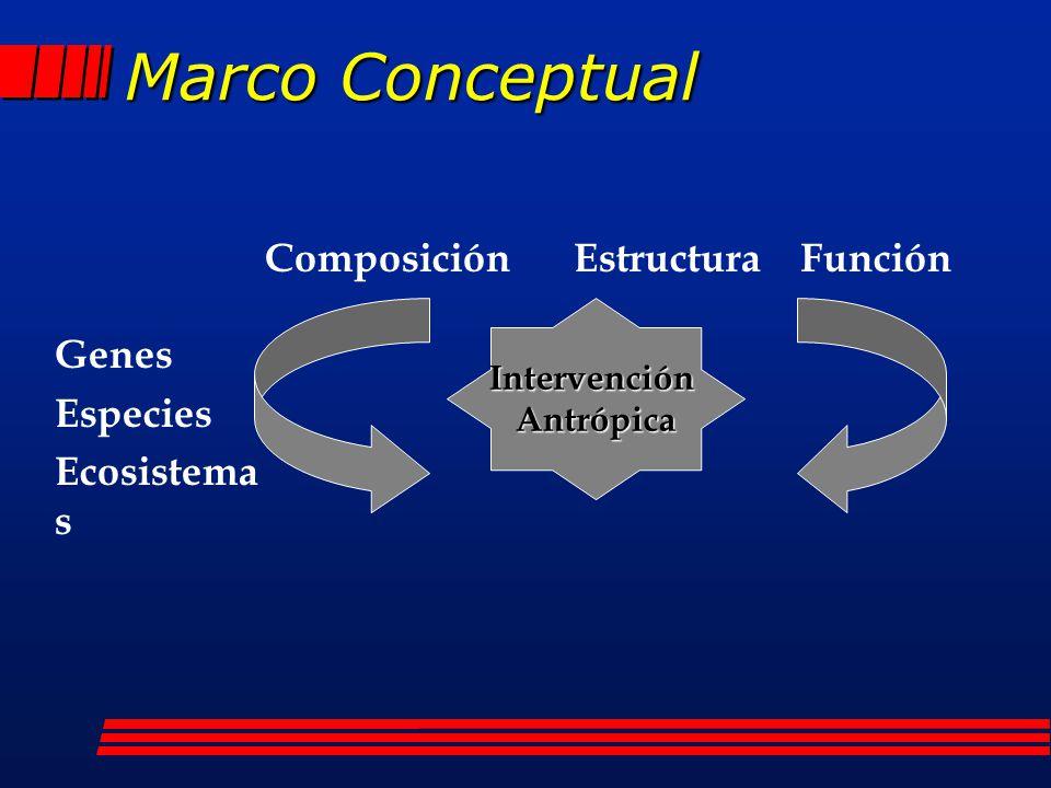 Marco Conceptual Composición Estructura Función Genes Especies