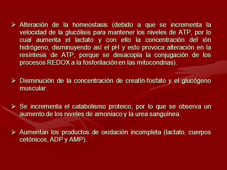 Alteración de la homeostasis (debido a que se incrementa la velocidad de la glucólisis para mantener los niveles de ATP, por lo cual aumenta el lactato y con ello la concentración del ión hidrógeno, disminuyendo así el pH y esto provoca alteración en la resíntesis de ATP, porque se desacopla la conjugación de los procesos REDOX a la fosforilación en las mitocondrias).