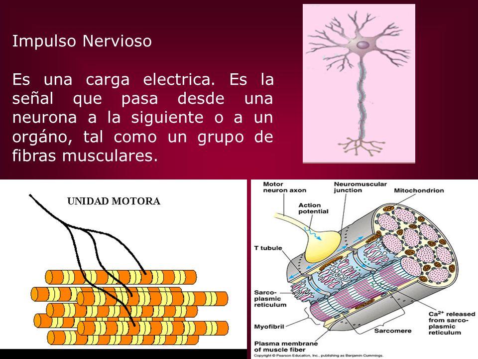 Impulso Nervioso Es una carga electrica.