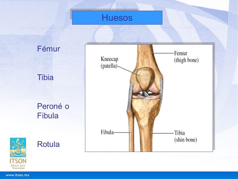 Huesos Fémur Tibia Peroné o Fibula Rotula
