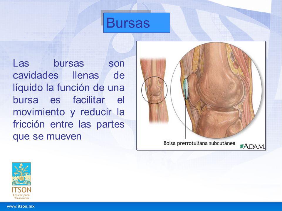 Bursas