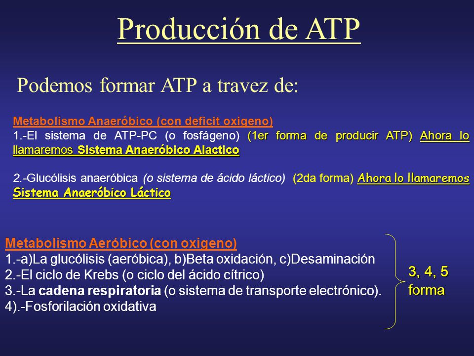 Producción de ATP Podemos formar ATP a travez de: 3, 4, 5 forma