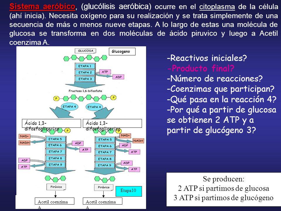 -Coenzimas que participan -Qué pasa en la reacción 4