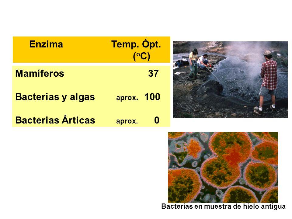 Bacterias y algas aprox. 100 Bacterias Árticas aprox. 0