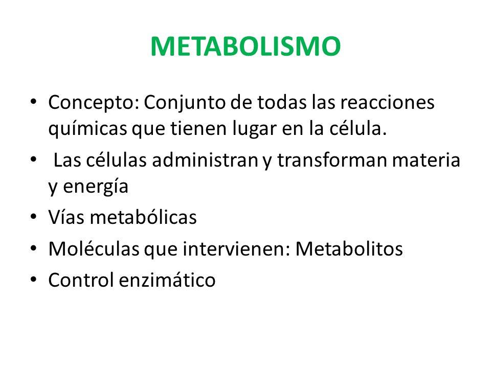 METABOLISMO Concepto: Conjunto de todas las reacciones químicas que tienen lugar en la célula.