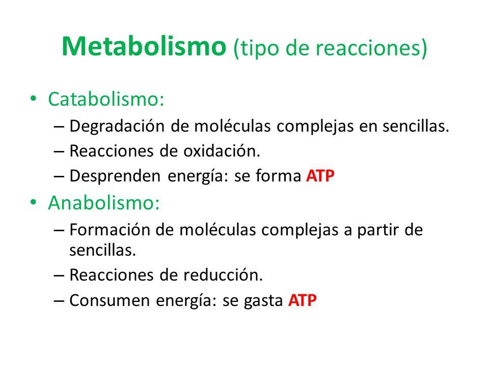 Metabolismo (tipo de reacciones)