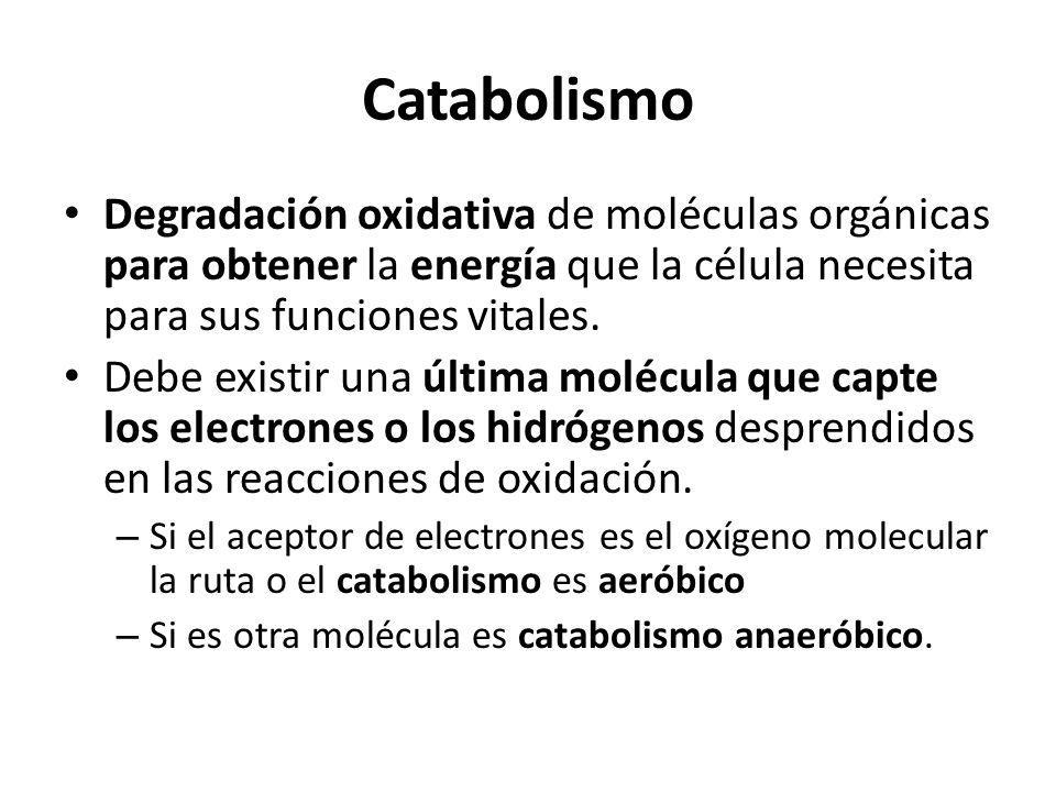 CatabolismoDegradación oxidativa de moléculas orgánicas para obtener la energía que la célula necesita para sus funciones vitales.