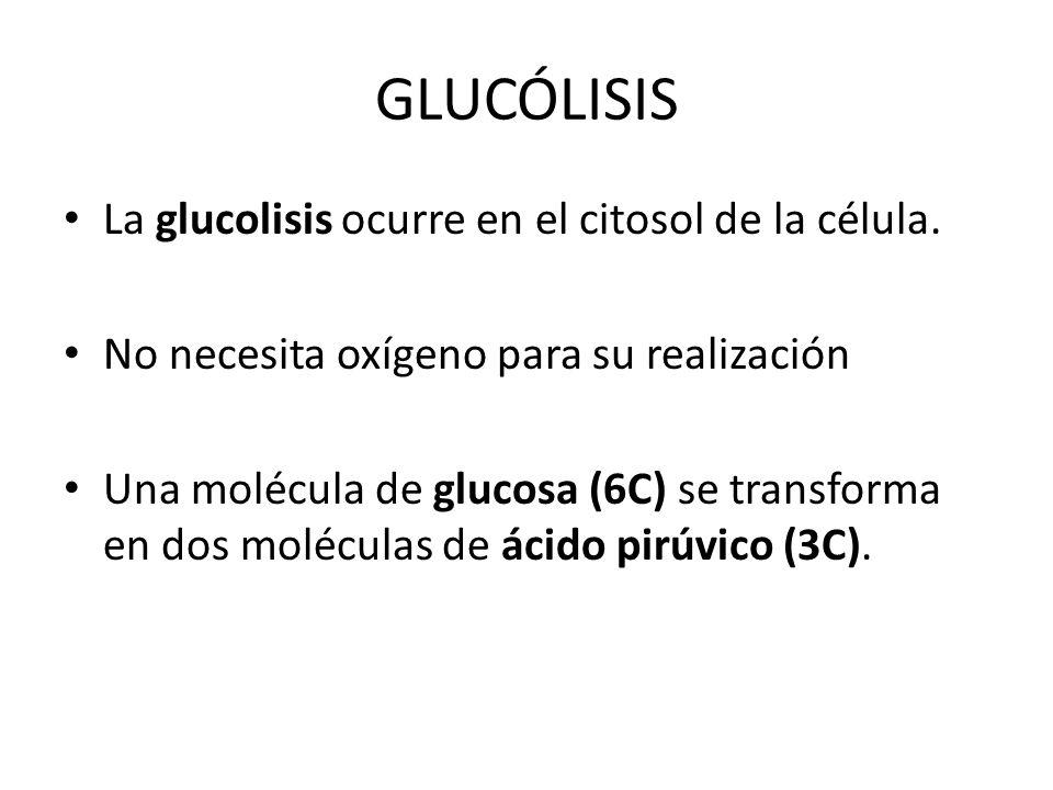 GLUCÓLISIS La glucolisis ocurre en el citosol de la célula.