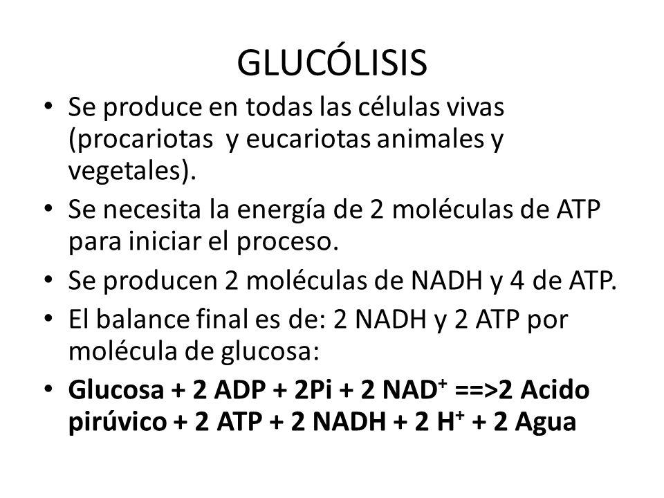 GLUCÓLISISSe produce en todas las células vivas (procariotas y eucariotas animales y vegetales).