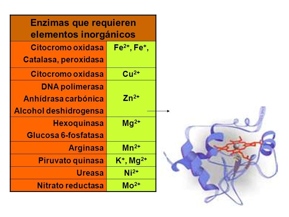 Enzimas que requieren elementos inorgánicos