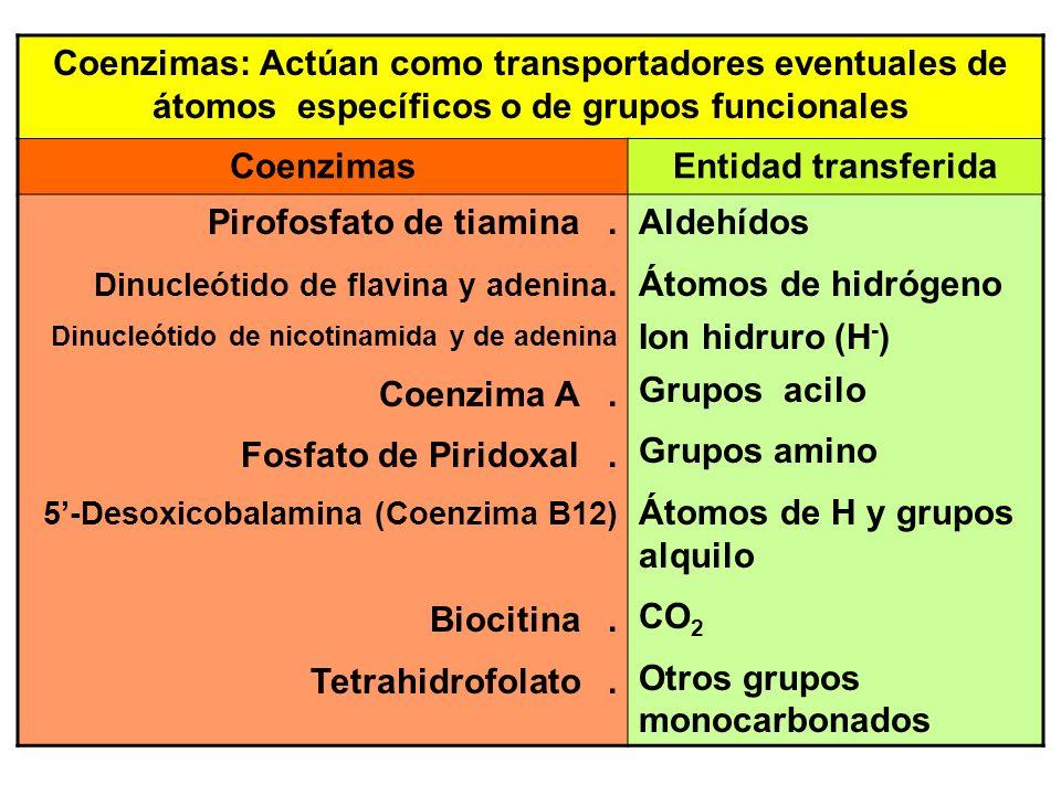 Pirofosfato de tiamina .