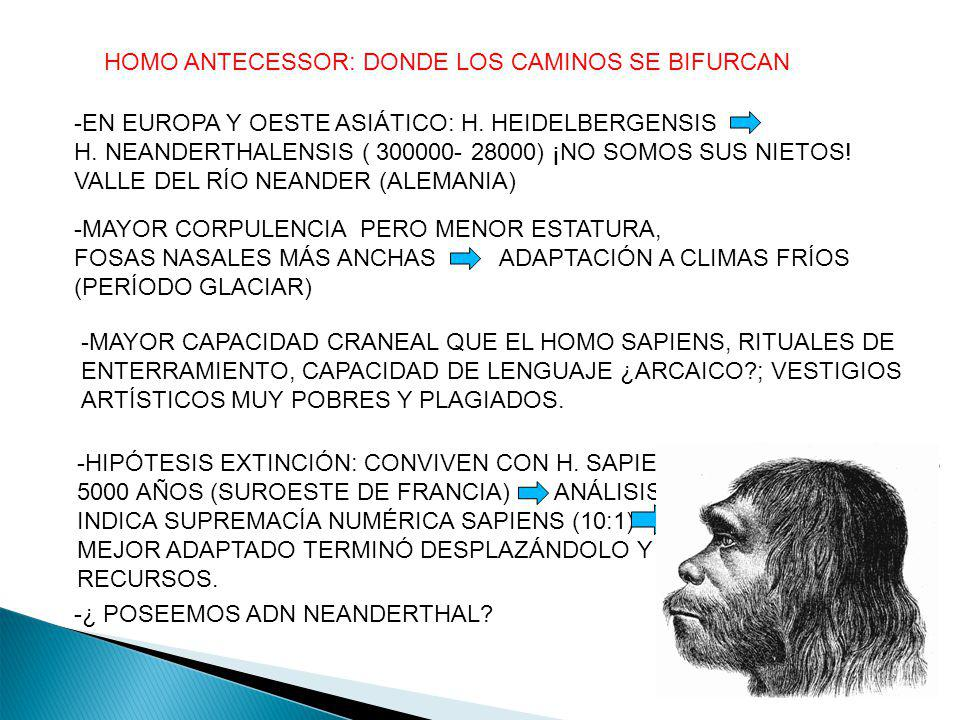 HOMO ANTECESSOR: DONDE LOS CAMINOS SE BIFURCAN