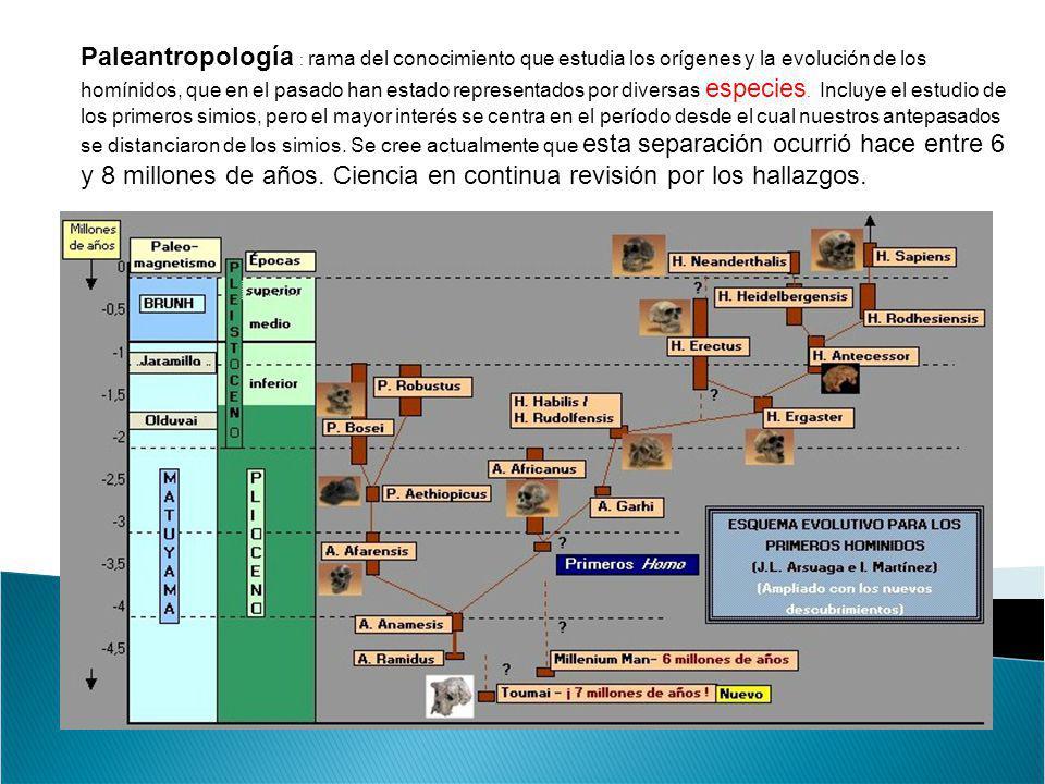 Paleantropología : rama del conocimiento que estudia los orígenes y la evolución de los homínidos, que en el pasado han estado representados por diversas especies. Incluye el estudio de los primeros simios, pero el mayor interés se centra en el período desde el cual nuestros antepasados