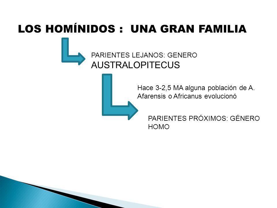 LOS HOMÍNIDOS : UNA GRAN FAMILIA