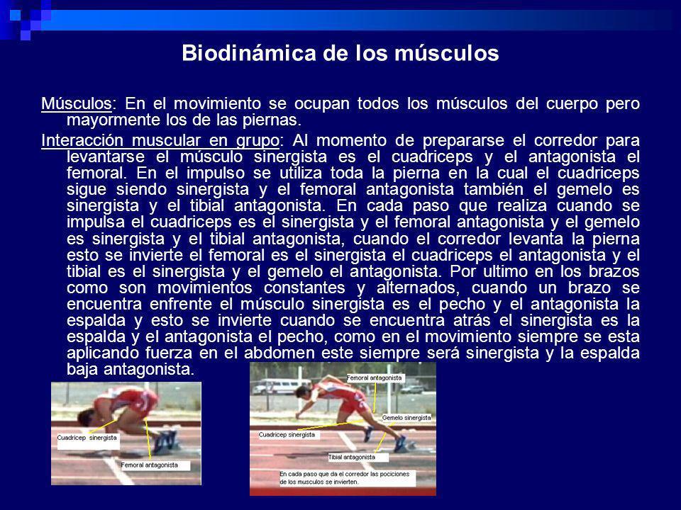 Biodinámica de los músculos