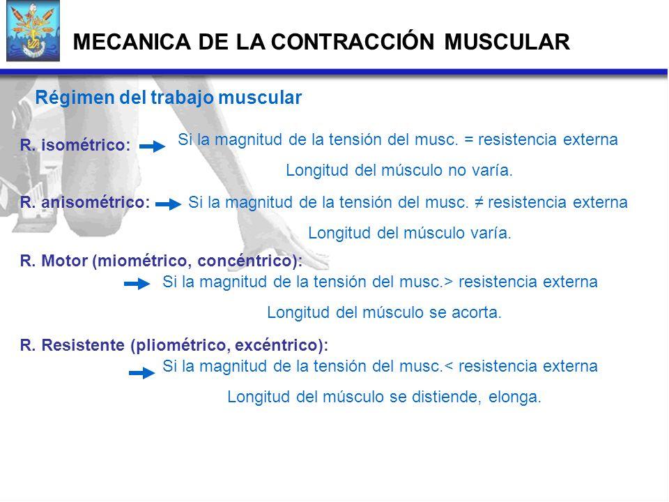 Régimen del trabajo muscular