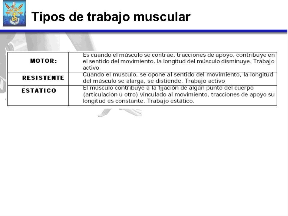 Tipos de trabajo muscular