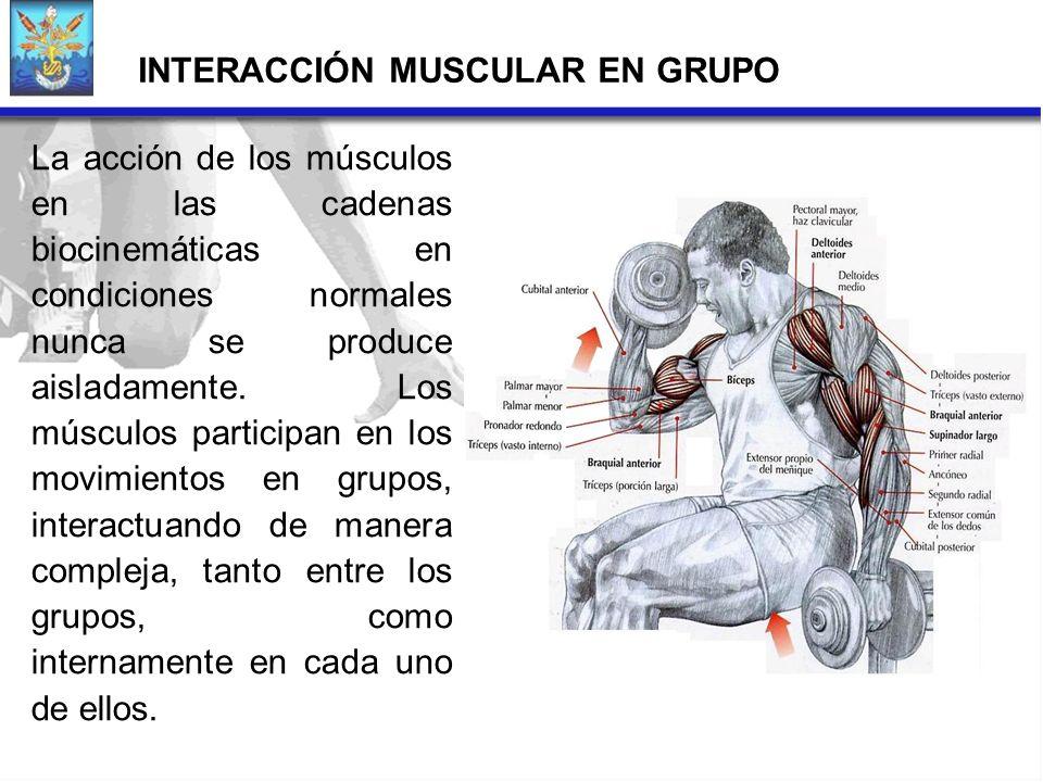 INTERACCIÓN MUSCULAR EN GRUPO