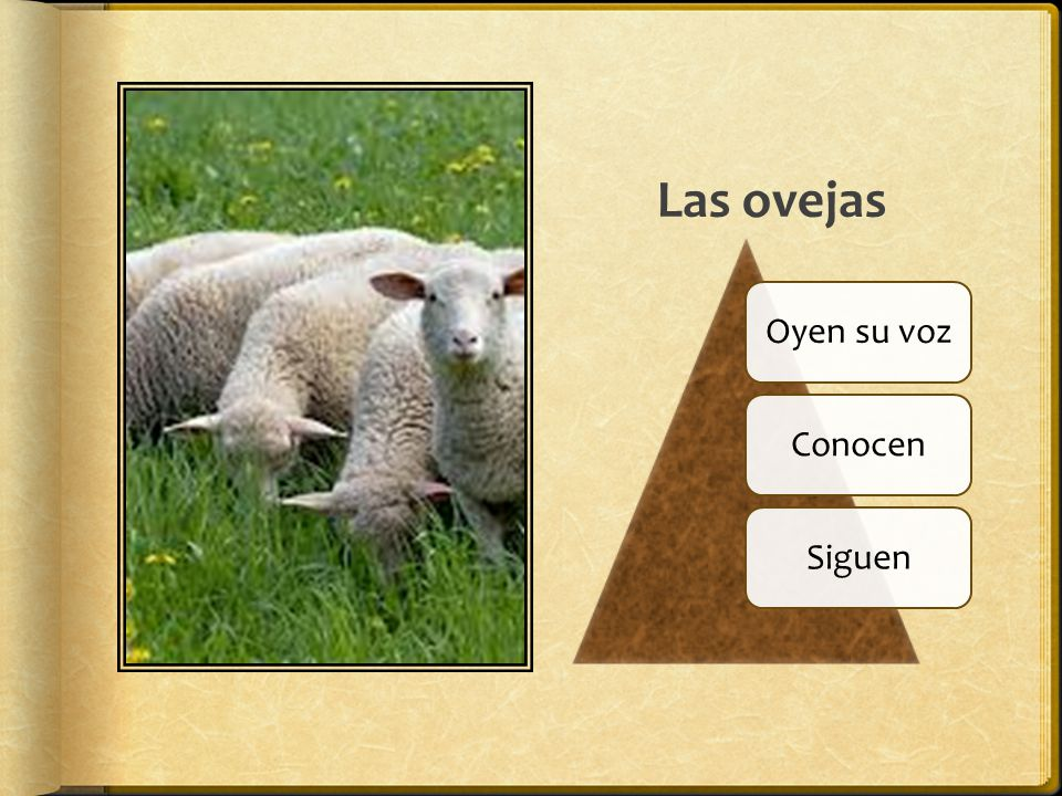 Las ovejas Oyen su voz Conocen Siguen