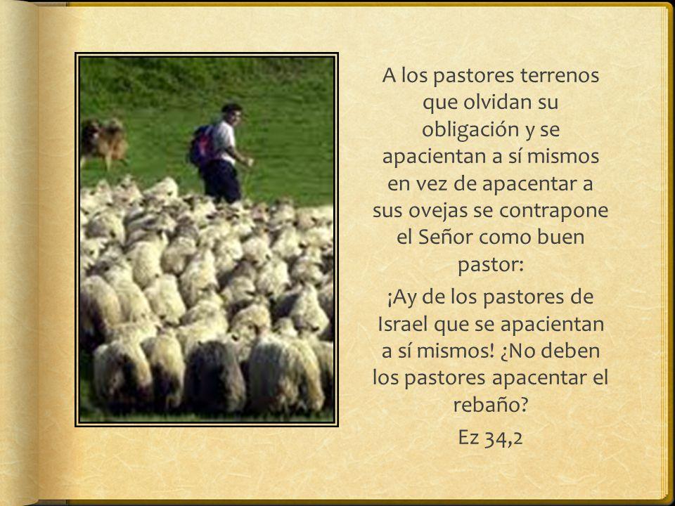 A los pastores terrenos que olvidan su obligación y se apacientan a sí mismos en vez de apacentar a sus ovejas se contrapone el Señor como buen pastor: