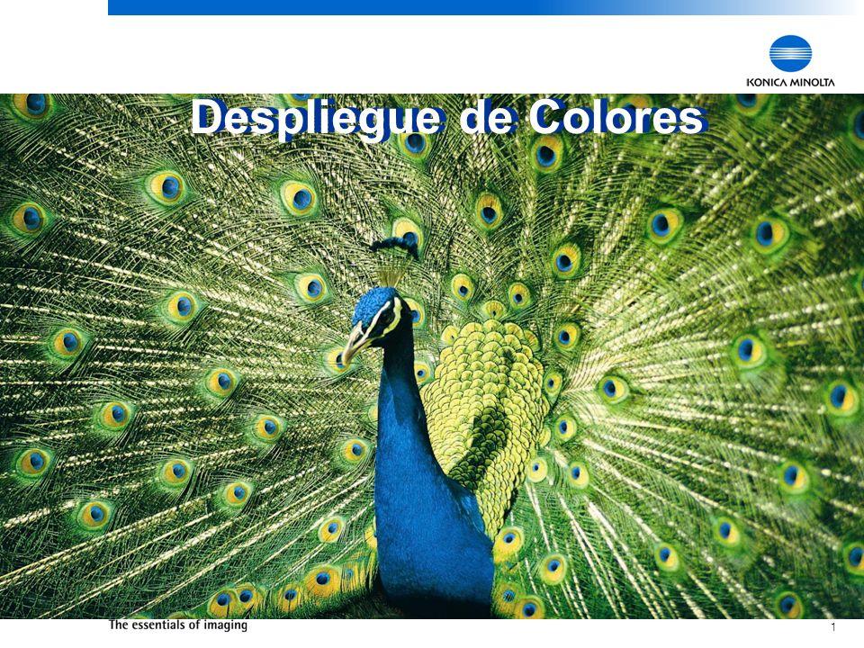 Despliegue de Colores Despliegue de Colores