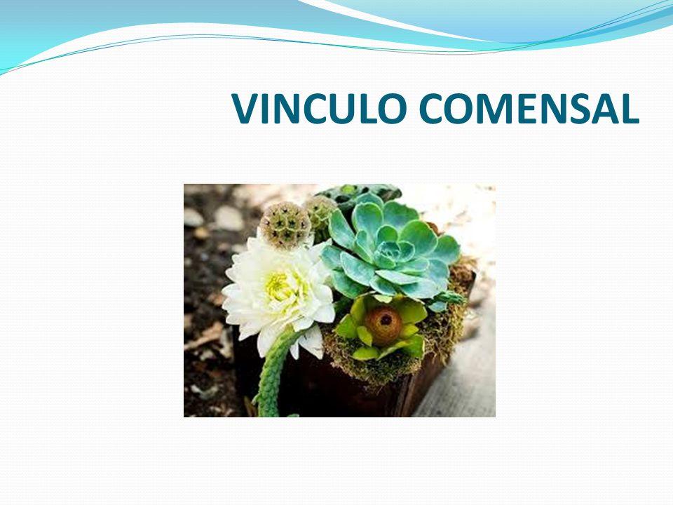 VINCULO COMENSAL