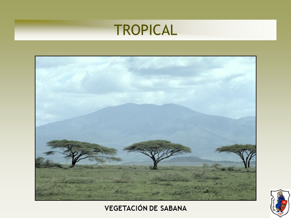 TROPICAL VEGETACIÓN DE SABANA