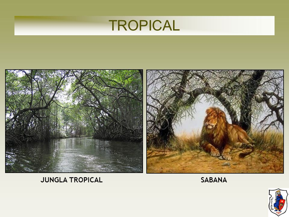 TROPICAL JUNGLA TROPICAL SABANA