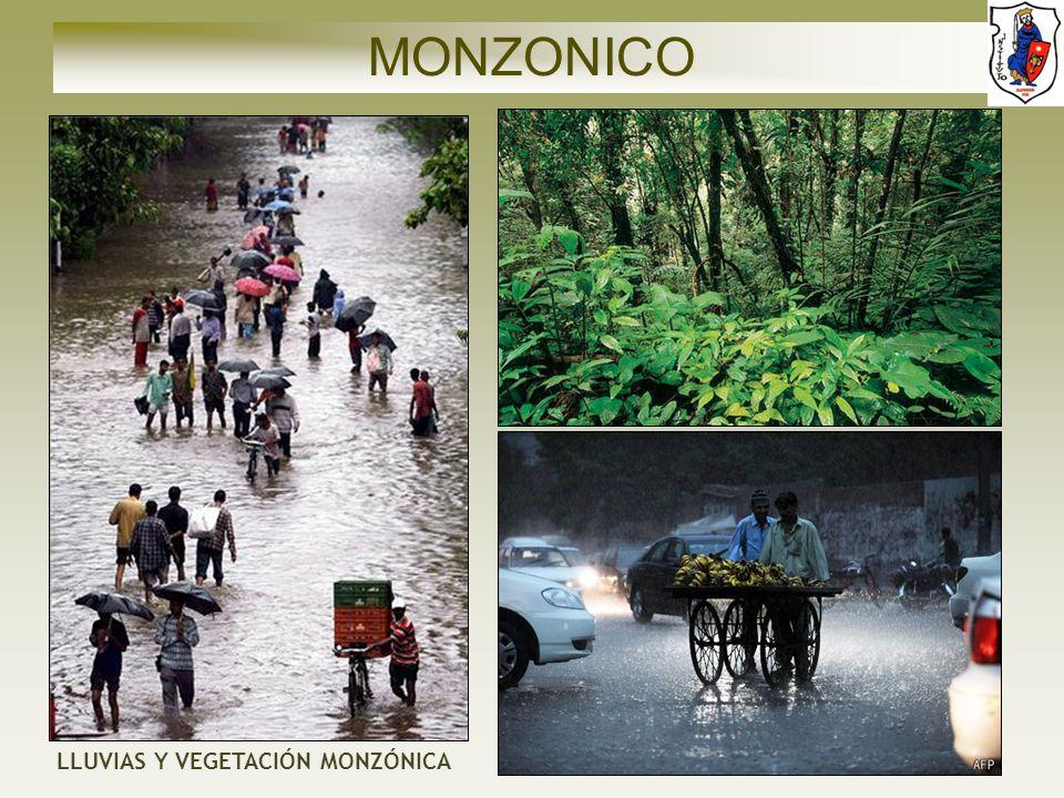 MONZONICO LLUVIAS Y VEGETACIÓN MONZÓNICA