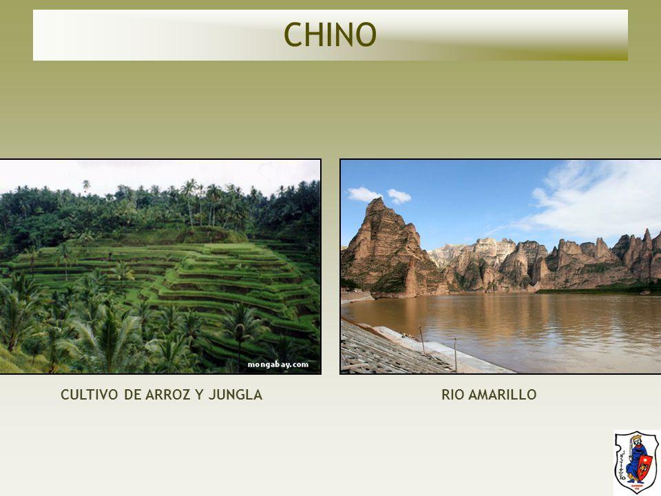 CHINO CULTIVO DE ARROZ Y JUNGLA RIO AMARILLO