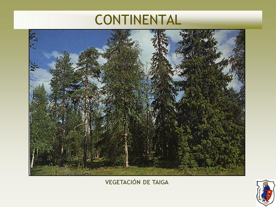 CONTINENTAL VEGETACIÓN DE TAIGA