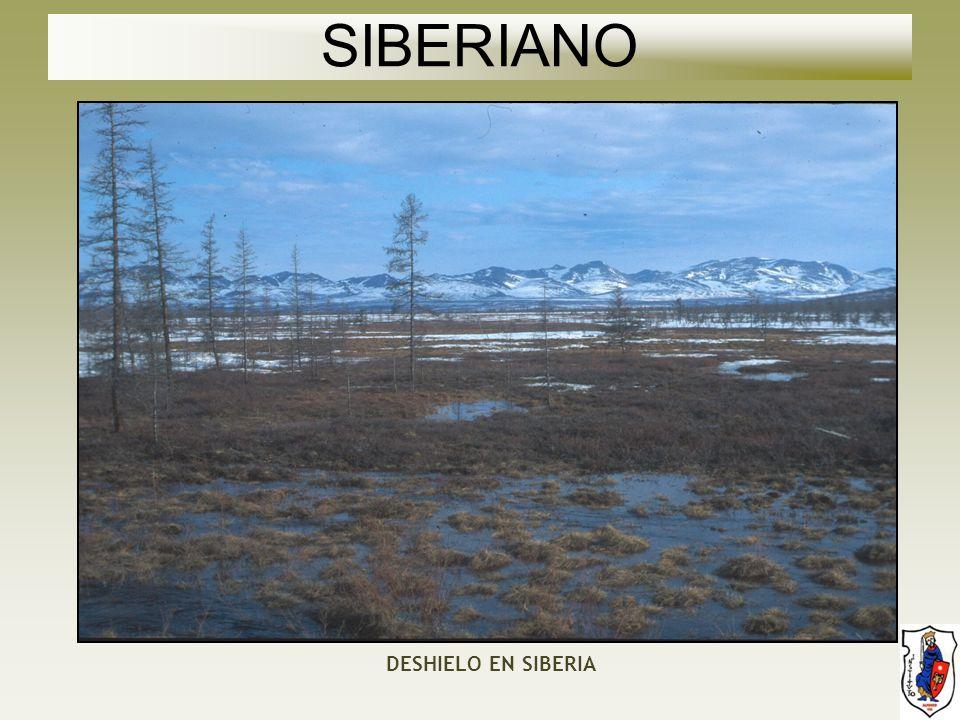SIBERIANO DESHIELO EN SIBERIA