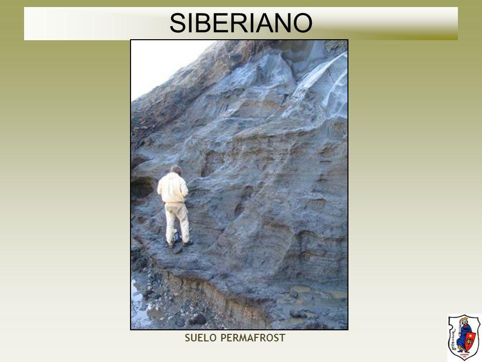 SIBERIANO SUELO PERMAFROST
