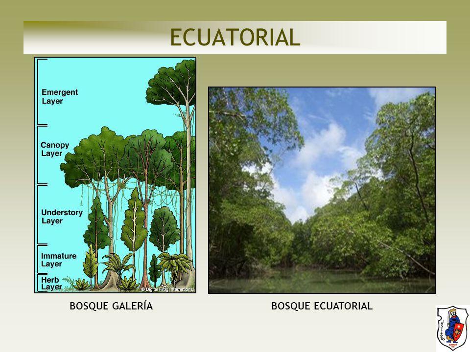 ECUATORIAL BOSQUE GALERÍA BOSQUE ECUATORIAL